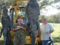 Alligator-Trophy-Hunt