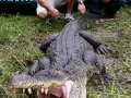 alligator-hunt2