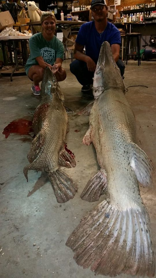 alligator-gar-2