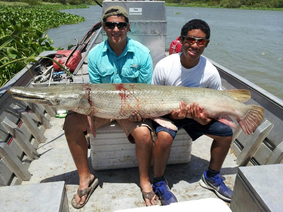 bowfishing-alligator-gar (10)