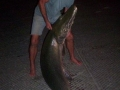 bowfishing-alligator-gar (6)