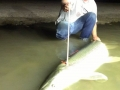 night-gar-bowfishing (1)