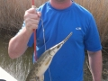 Texas-bowfishing (48)