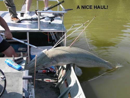 fish22-1